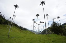 Cocora vallei Colombia