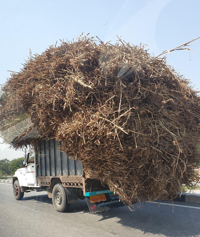 Hooiwagen_India