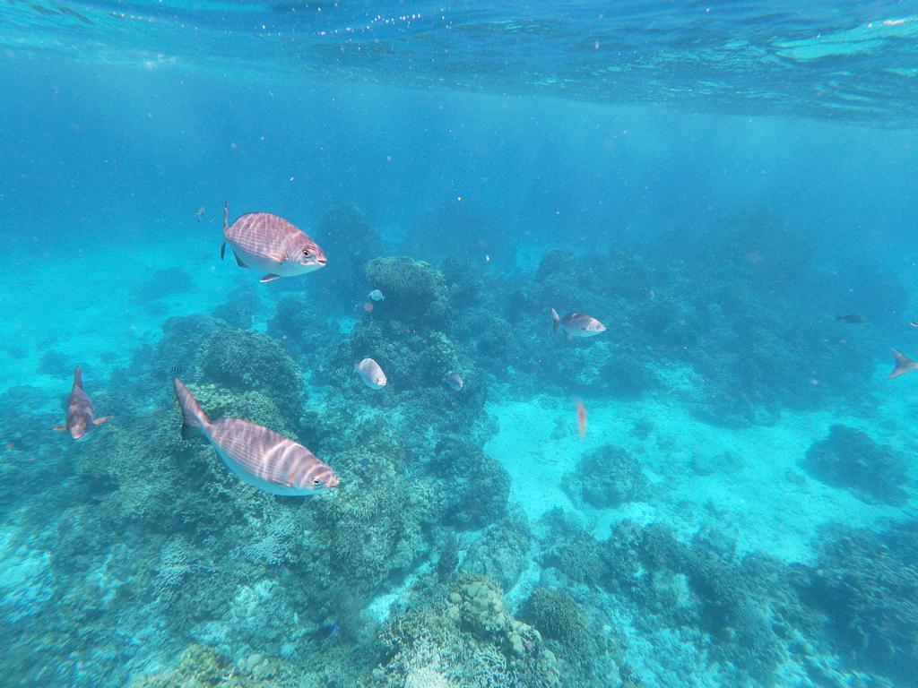 Vissen_Yucatan