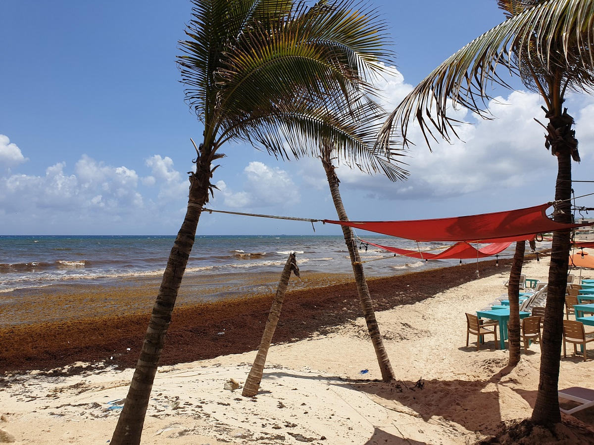 Sargasso_Yucatan