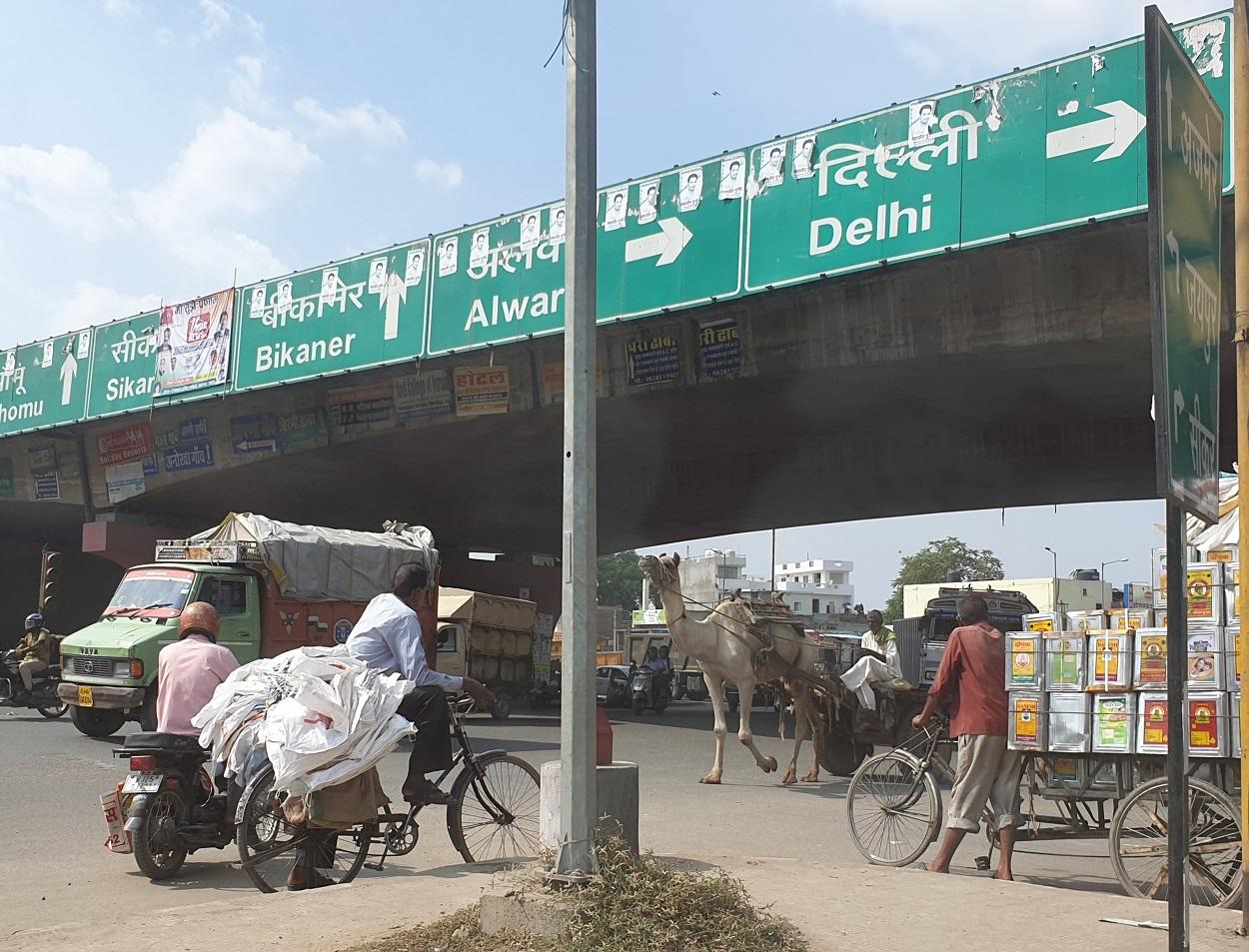 Kameel op de weg_India