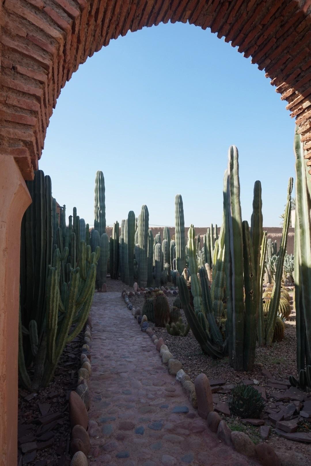Cactussentuin_Museé_la_Palmeraie_Marrakech_Marokko