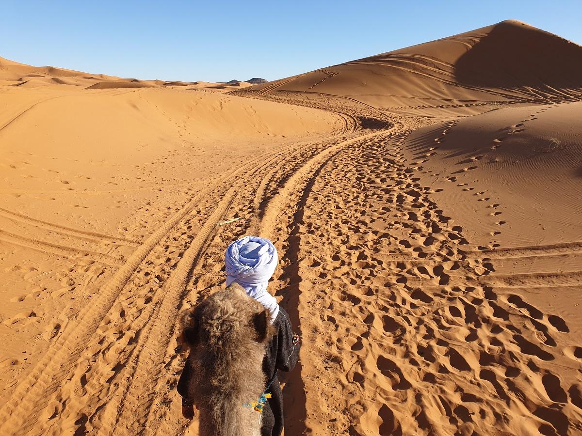 Dromedaris_Merzouga_woestijn