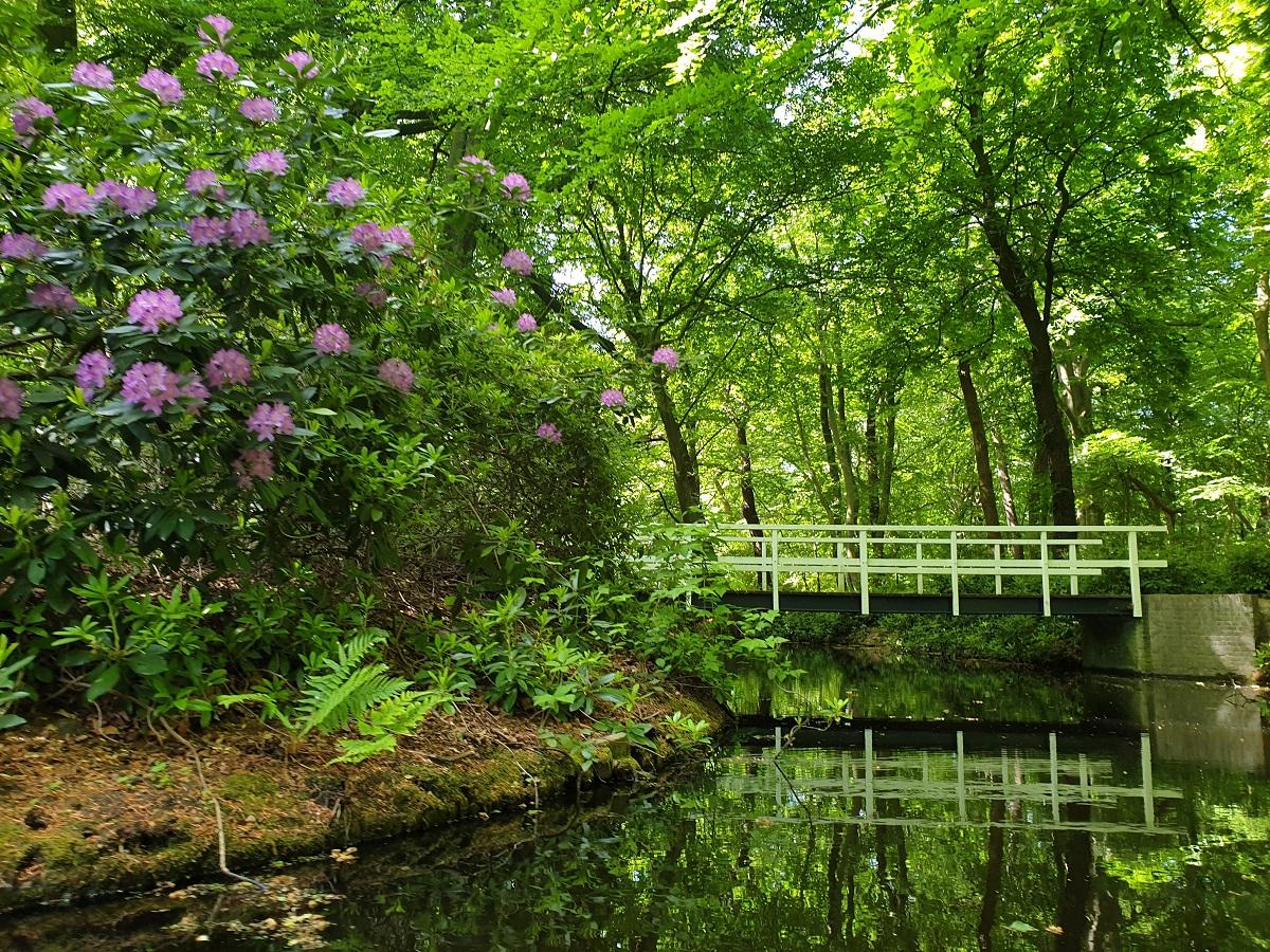 Rhododendrons_Oosterbeek_uitjes_Zuid_Holland