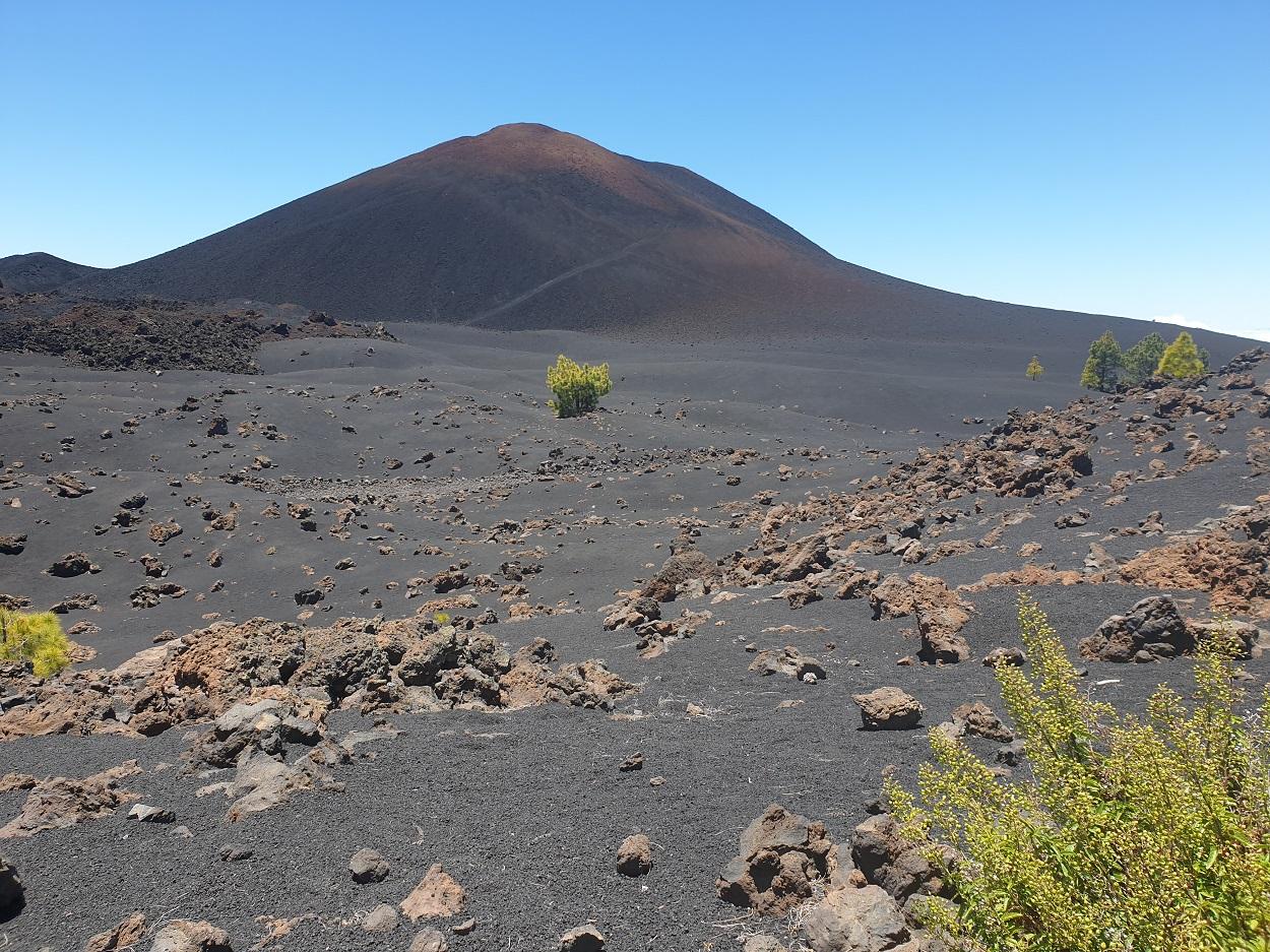 Tenerife_Chinyero_vulkaan_struiken